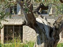 architect-renovation-maison-piscine-eygalieres-maussane-13520